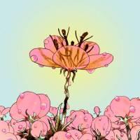 Droll - 'Bitter Flower' Album Review